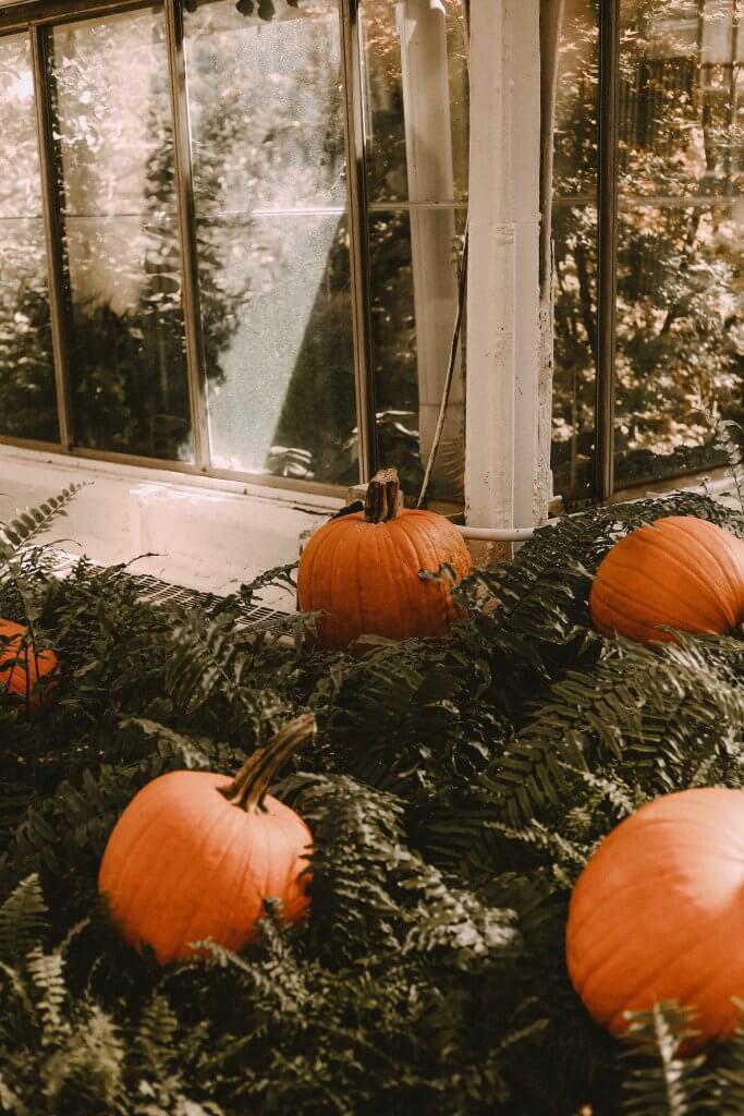decor ideas on Halloween