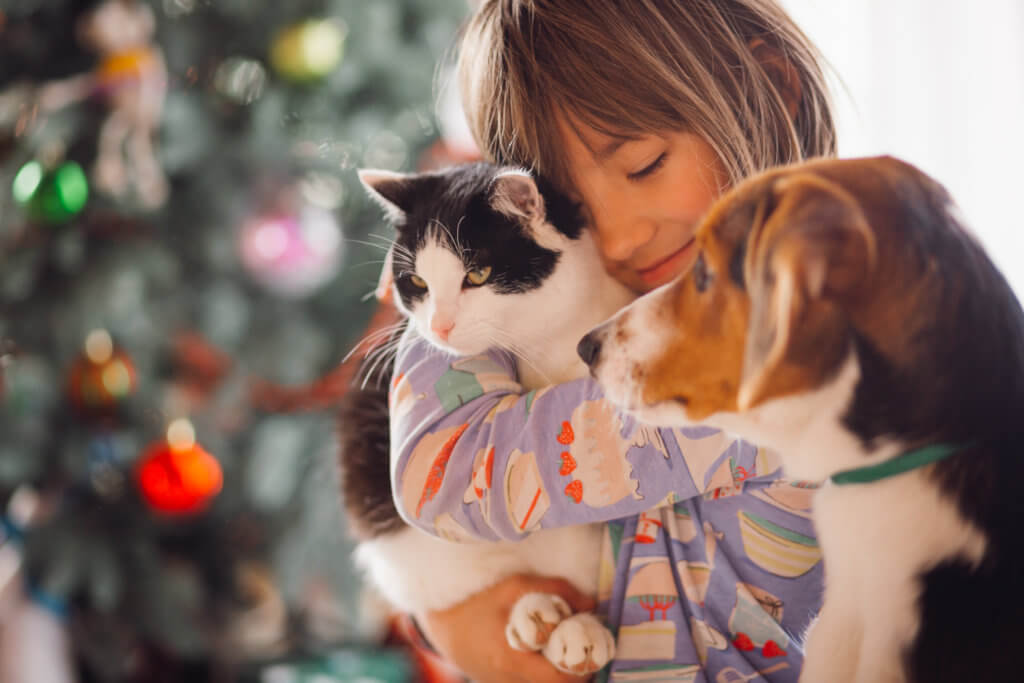 fostered pets showed positive statistics in 2020