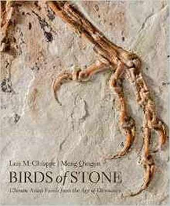 9781421420240-1421420244-Birds of Stone: Chinese Avian Fossils from the Age of Dinosaurs
