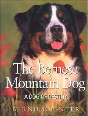 9780974540733-0974540730-The Bernese Mountain Dog: A Dog of Destiny